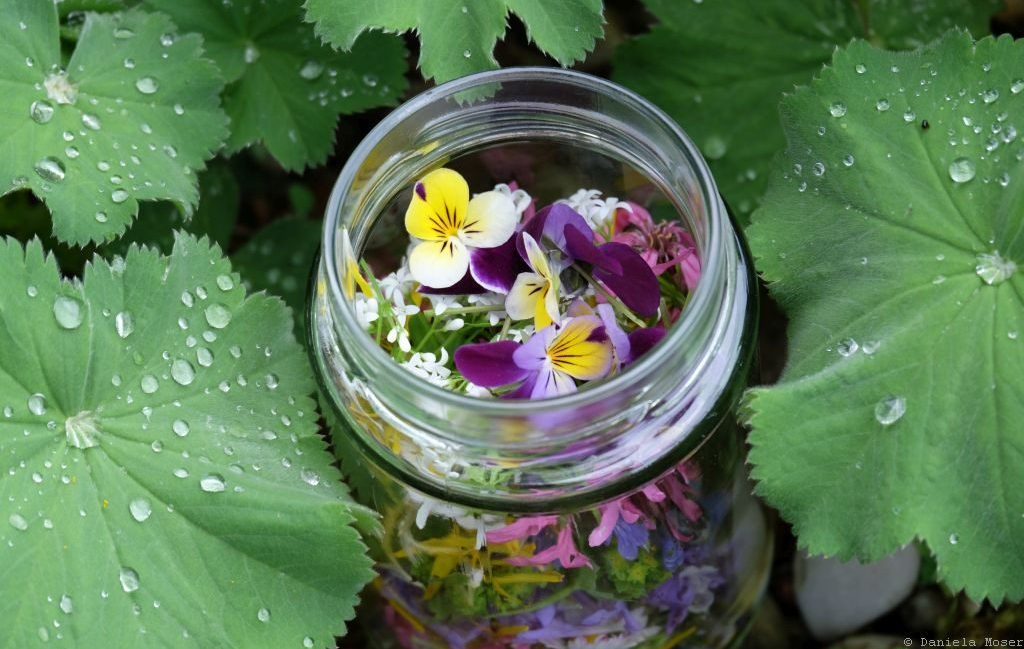 Frühlingsblüten im Glas